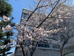 桜満開20210324